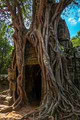 Angkor Entrance Through Time (shapeshift) Tags: architecture ancient asia cambodia angkor carvedstone davidpham travel tree stone temple ruins gate southeastasia khmer roots unesco jungle siemreap worldheritage shapeshift tasom templecomplex khmerempire davidphamsf