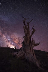 Candle Flame (Maddog Murph) Tags: mountain mountains tree trees white bristlecone pine pinecone sillouette astro astrology night nighttime nightscape photography landscape shooting star galaxies galaxy milky way california