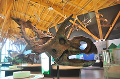 20190712-DSC_0511 (Beothuk) Tags: wembely alberta the philip j currie dinosaur museum friday july 12 2019