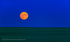 Full Moonrise on Apollo 11 Launch Anniversary Night (Amazing Sky Photography) Tags: alberta apollo11 fullmoon july moonrise rising anniversary farm field greenfield horizon orangemoon prairie telescope wheat