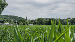 The Ardennes (DC P) Tags: thon ardennes ardenne ardennen belgie belgium nature field pov adventure angle a7rii beautiful bej bokeh color dof depth digital explore fantastic farm green landscape landschaft ngc netherlands natur outdoor outside outdoors panorama paradise plant belgique serene sky travel trekking view village world wide church tower old
