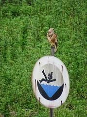 waiting for prey (Peter Schüler) Tags: flickr hunter prey vogel peterpe1 duisburg ruhrgebiet