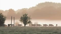 A foggy sunrise today...