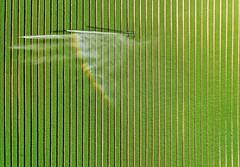 Crop irrigation (jackie t2) Tags: appicoftheweek