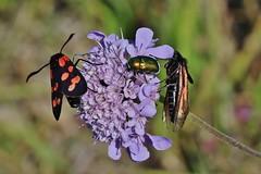 3 (Hugo von Schreck) Tags: hugovonschreck moth bug macro makro insect insekt