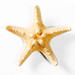 Yellow sea star on white background