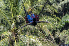 swing (Greg M Rohan) Tags: nikon d750 nikkor 2018 bali girl lady palms indonesia asia swing palm palmtrees バリ balançoire 巴厘島 スイング 搖擺 lunglay