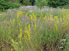 Hochsommer (borntobewild1946) Tags: bienenwiese insektenwiese wiese meadow blüten copyrightbyberndloosborntobewild1946 nrw nordrheinwestfalen rheinland rhinearea