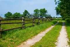 Hinterm Deich (antje whv) Tags: norddeutschland northgermany grün landschaft landscape weg path zaun fence haus house wangerland
