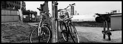 Seperated (namaikisaru2012) Tags: pentax67 takumar105mmf24 film blackwhite monochrome japan 35mmfilmadapter panorama ilfordhp5