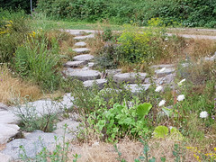 Hochsommer (borntobewild1946) Tags: felsplatten steine steinig stones stony bungt mönchengladbach moenchengladbachbungt copyrightbyberndloosborntobewild1946 nrw nordrheinwestfalen rheinland rhinearea