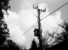 Power lines pole (Matthew Paul Argall) Tags: belomoetude fixedfocus 120film 120 mediumformat fomapan100classic 100isofilm powerlines powerlinespole