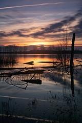 Amanece (pascual 53) Tags: 50mm canon eos5ds largaexpo laguna amanecer colores caos madera arboles navarra reflejos estelas lucroit lee