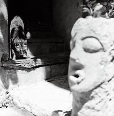 (Ah - Wei) Tags: bronica ectl 120 6x6 aristaeduultra400 bw film cat