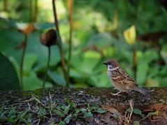P1091518_LR (enno7898) Tags: panasonic lumix lumixg9 dcg9 xvario 35100mm f28 plants bird