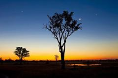 After Sunset, Okavango Delta, Moremi Game Reserve, Botswana, Africa (klauslang99) Tags: africa african botswana game landscape moremi nature orange park reserve safari sun sunset travel tree klauslang