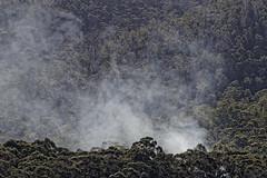IMG_6700 (tasrenee14) Tags: tasmania australia oystercovetasmania trees bushland smoke nature landscape