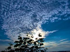 Rompiendo la mañana (Luicabe) Tags: airelibre amanecer aìrbol cabello calle cieloazul enazamorado exterior hoja luicabe luis naturaleza nube paisaje planta yarat1 zamora ngc árbol clouds sky