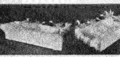 This image is taken from United States Naval Medical Bulletin Vol. 13, Nos. 1-4, 1919 (Medical Heritage Library, Inc.) Tags: podiatry world war i cardiology influenza uss solace hospital ship scarlet fever pathology ernest goodpasture venereal disease sexually transmitted syphilis malaria history medicine nh washington haiti nursing comfort leviathan radiology psychiatry charleston usnavybumedhistoryoffice medicalheritagelibrary date1919 idnavalmedicalbulletin131919
