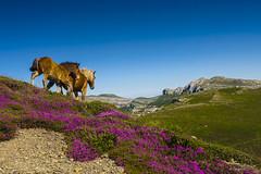 Libres (Carpetovetón) Tags: caballos horse cantabria paisaje landscape montañas mountain colores cielo peñalusa sonya6000 nikon24mm