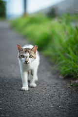 猫 (fumi*23) Tags: animal cat bokeh sony 85mm gato neko 猫 ねこ ソニー emount ilce7rm3 a7r3 fe85mmf18 sel85f18