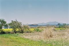 Mt. Kamafuse from Yokohama Town (しまむー) Tags: minolta α9000 af 50mm f17 kodak gold 200 横浜 菜の花 蕪島神社 列車 train yokohama kabushima