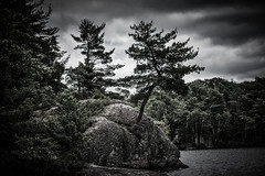 Moody Muskoka (KWPashuk (Thanks for >3M views)) Tags: sony alpha a6000 55210mm lightroom luminar2018 luminar luminar3 luminar31 kwpashuk kevinpashuk rocks pine trees lake muskoka ontario canada nature outdoors moody