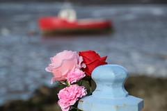 Flowers on railings at Morecambe (Ian Press Photography) Tags: morecambe lancs lancashire seaside sea side coast flowers railings