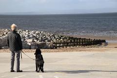 Dog walking on Morecambe front (Ian Press Photography) Tags: morecambe lancs lancashire seaside sea side coast dog walking front