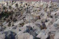 Stone Jetty at Morecambe (Ian Press Photography) Tags: morecambe lancs lancashire seaside sea side coast stone jetty