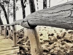 Wanna walk through mendicant way? (Shushanta Chakraborty) Tags: mobilephotography cellphonephotography photography passion beautiful monochromatic monochrome road artificial wooden rangamati chittagong bangladesh trees snapseed teampixel travel travelphotography travelling