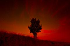 Le modèle Janus (Fabrice Gillet) Tags: tree night dawn red mist mythology bimetricgravity cosmology stars wideangle tokina rouge