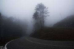 The dark highway (Ismael Owen Sullivan) Tags: digital travel españa naturaleza nature forest dark photography nikon europa europe foto natural paisaje galicia fotografia turismo pontevedra traveler oscuridad oscuro aguarda laguadia d5300 carretera