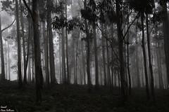 The dark forest (Ismael Owen Sullivan) Tags: digital d5300 dark foto fotografia forest oscuridad oscuro pontevedra paisaje photography galicia aguarda laguadia europa españa europe nikon nature naturaleza natural travel turismo traveler