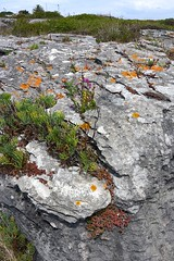 rock-with-plants-3993 (Pixel Peasant) Tags: peniche portugal