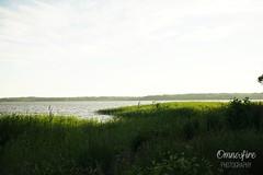 DSC02407 (omnosfire) Tags: helsinki landscape cityscape urbanphotography urban finland helsinkicity arabia arabiaranta sea water nature nauturephotography city finnish munkkiniemi beach sunset grass juhannus juhannus2019 sonyalpha7ii sony