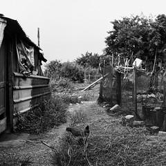 Untitled (richardhwc) Tags: rolleicord vb blackandwhite kodak trix400 sanshui guangdong china schneiderkreuznach xenar 75mmf35 mediumformat 120 6x6 film