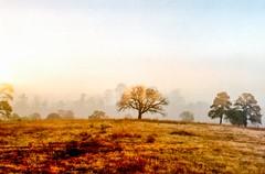 On how the sun rises (lunacornata) Tags: 35mm analog analogue analogica analogico analoga analogo landscape sunrise sun nature naturescape trees tree land mexico kodak