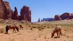 Monument Valley, Arizona 2009-062.jpg (Mike.MRM) Tags: shared 16x9 landscapeimage 2009arizona animals monumentvalley horse arizona 2009trip oljatomonumentvalley unitedstates