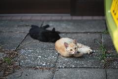 猫 (fumi*23) Tags: ilce7rm3 sony sel85f18 85mm fe85mmf18 a7r3 animal ねこ 猫 ソニー cat gato neko katze alley emount kitten kitty