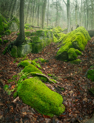 Mossy Forest (Chris Noronha Photo) Tags: canada chrisnoronhaphotography hamilton nikond850 ontario sepncergorge spring webstersfalls water forest green moss nature trees fog mossy rocks landscape