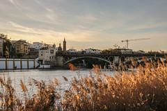 190127-Paseo-Sevilla-08 (NachoDlRios) Tags: andalucia cielo españa europa europe mundo naturaleza plant planta rio sevilla sky spain world