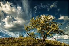 Blau (linke64) Tags: thüringen deutschland germany landschaft natur himmel hügel wolken busch blau wolkenhimmel gras