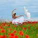 Poppies # 07