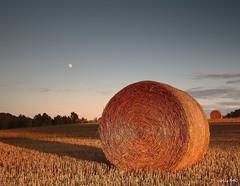 Bassillon-Vauze (oliv340) Tags: sunset landscape bassillon vauze occitanie france sudouest paysage champs paille nature moon lune canon sigma hautespyrenees
