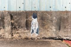 EPSN0215 (alexdotbarber) Tags: coolidge epsonrd1 houston voigtlandernoktonclassic35mmf14 cat digitalrangefinder f8 manualfocus rangefinder stencil streetart