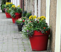 Muthill Flower Pots (eric robb niven) Tags: ericrobbniven scotland dundee muthill flowers pots cycling