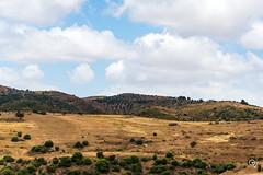 DSC_5252 (Gér@ld) Tags: tunisia nikon d7500 nature djebba landscape