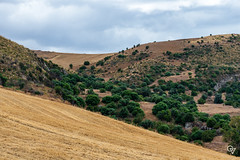 DSC_5251 (Gér@ld) Tags: tunisia nikon d7500 nature djebba landscape
