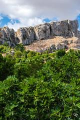 DSC_5199 (Gér@ld) Tags: tunisia nikon d7500 nature djebba landscape